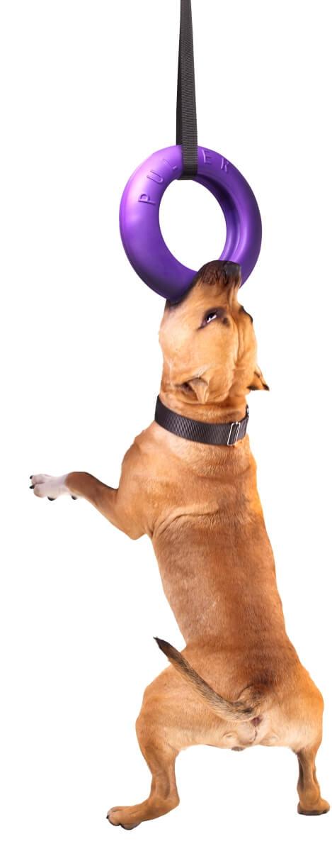 אביזר אימון לכלבים פולר מקסי - Puller Maxi 1