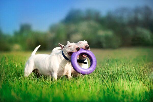 אביזר אימון לכלבים פולר מקסי - Puller Maxi 3