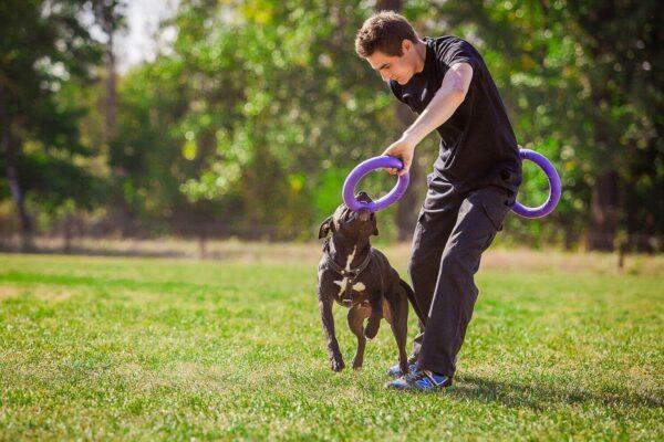 אביזר אימון לכלבים פולר סטנדרט - Puller Standard_01