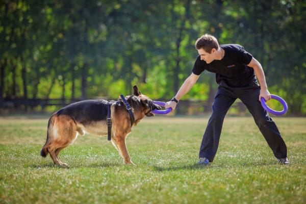 אביזר אימון לכלבים פולר סטנדרט - Puller Standard_02