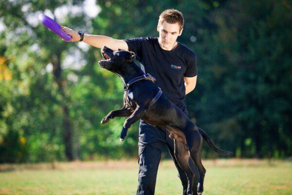 אביזר אימון לכלבים פולר סטנדרט - Puller Standard_03