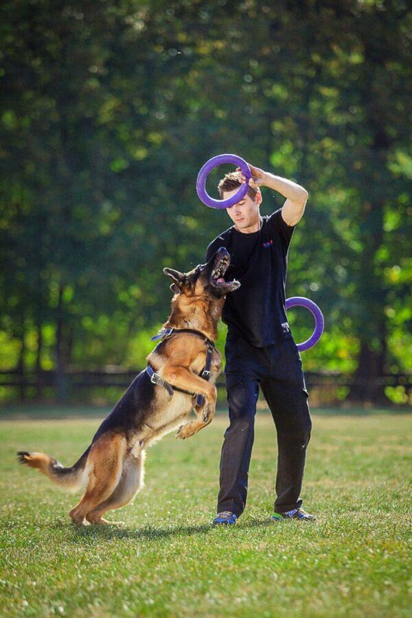 אביזר אימון לכלבים פולר סטנדרט - Puller Standard_04