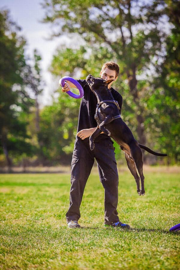 אביזר אימון לכלבים פולר סטנדרט - Puller Standard_05