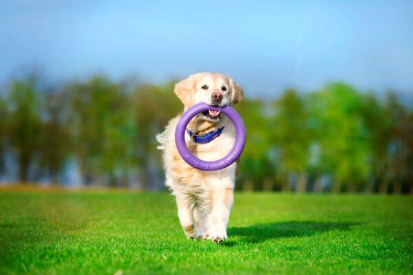 אביזר אימון לכלבים פולר סטנדרט - Puller Standard_07