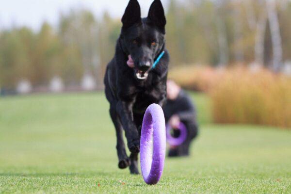 אביזר אימון לכלבים פולר סטנדרט - Puller Standard_08