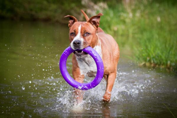 אביזר אימון לכלבים פולר סטנדרט - Puller Standard_09