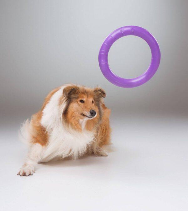 אביזר אימון לכלבים פולר סטנדרט - Puller Standard_12