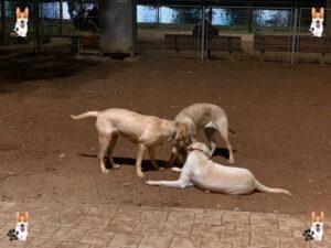גינת כלבים אוסישקין - גינות כלבים