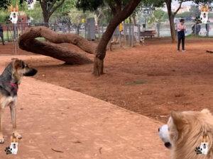 גינת כלבים אוסישקין - גינת כלבים
