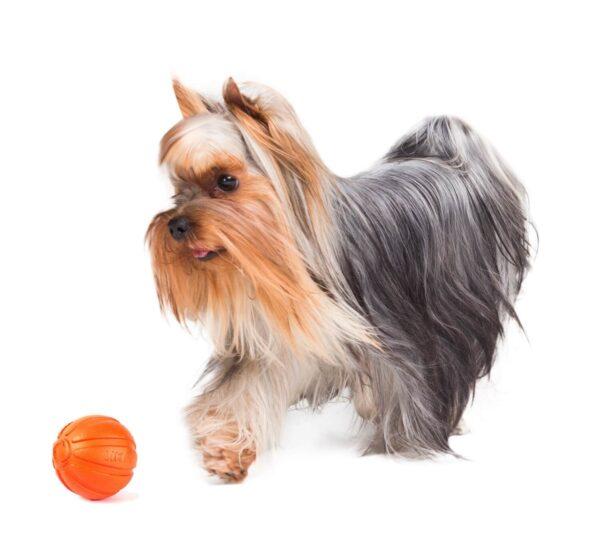 כדור לגורים וכלבים מגזעים קטנים - LIKER 5 - 1
