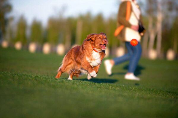 כדור לעידוד משחק לכלבים מגזעים בינוניים - LIKER 7 - 3
