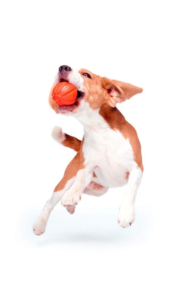 כדור לעידוד משחק לכלבים מגזעים בינוניים - LIKER 7 - 4