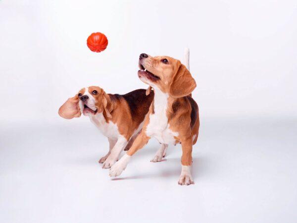 כדור לעידוד משחק לכלבים מגזעים בינוניים - LIKER 7 - 5