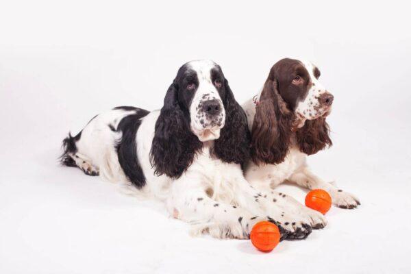 כדור לעידוד משחק לכלבים מגזעים בינוניים - LIKER 7 - 6
