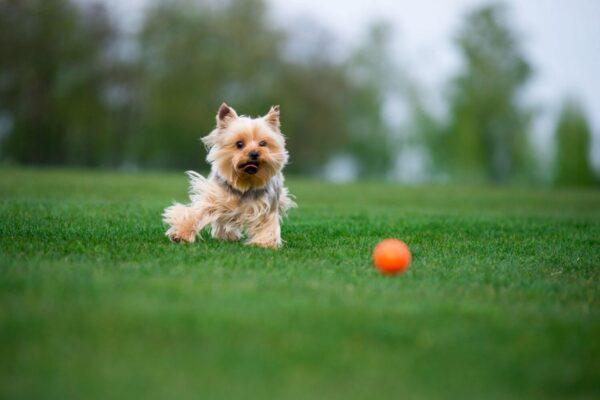 כדור לעידוד משחק לכלבים מגזעים בינוניים - LIKER 7 - 7