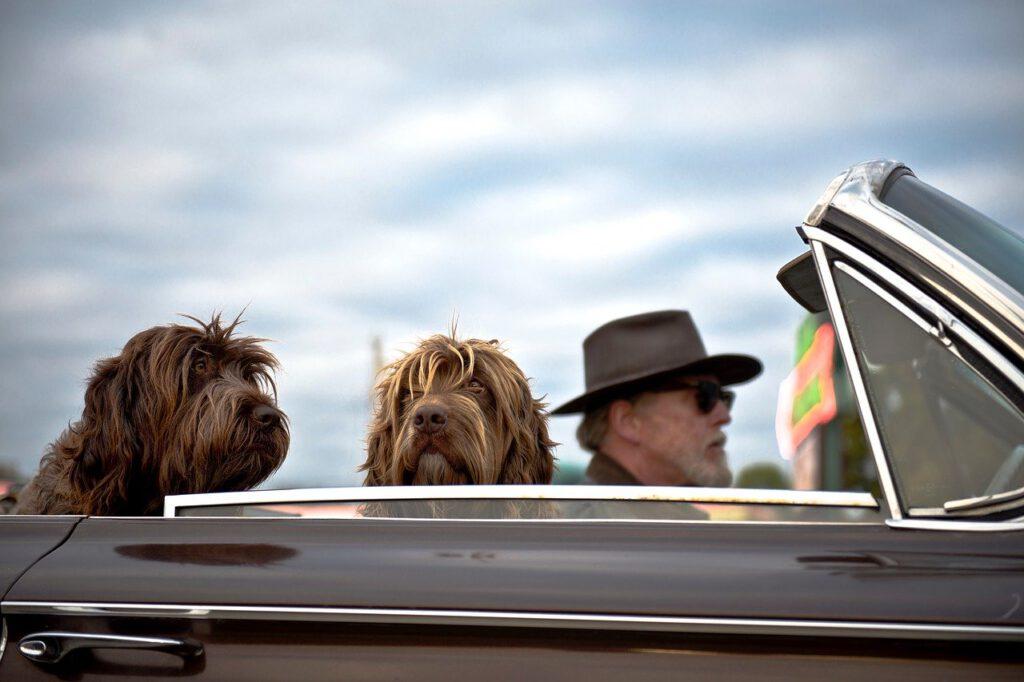 הוצאת גור הכלבים לכמה שיותר טיולים
