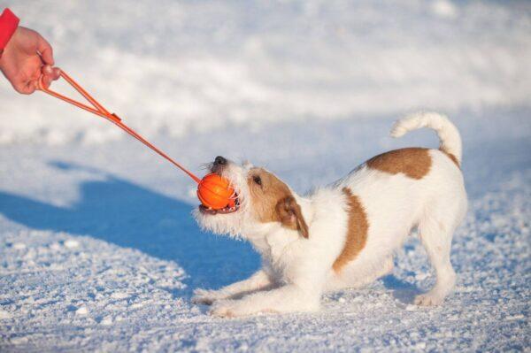 כדור עם רצועה לעידוד משחק לכלבים מגזעים בינוניים - LIKER Line 9 - 2