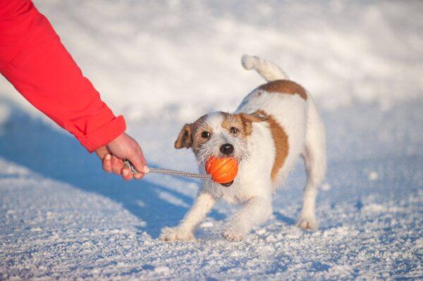 LIKER Cord 7 - כדור עם חוט לעידוד משחק לכלבים מגזעים בינוניים - 3