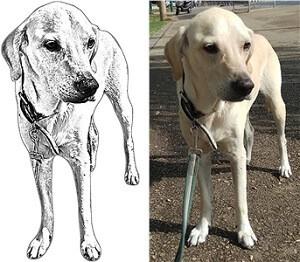 סקיצה מעוצבת של הכלב - שרשרת עם תיליון מצופה כסף
