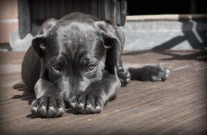איך לבחור שם לכלב החדש שלכם
