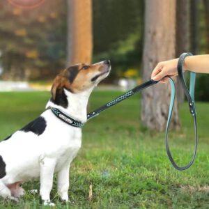 רצועה וקולר מודרניים לכלב