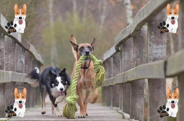 צעצועים לחיות חבלים לכלב