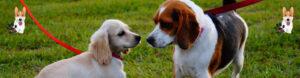 גינת כלבים גן התותחן