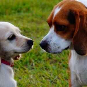 גינת כלבים פארק הסופרים